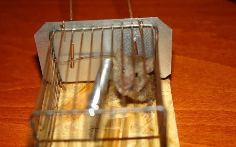 как избавиться от мышей в гараже навсегда