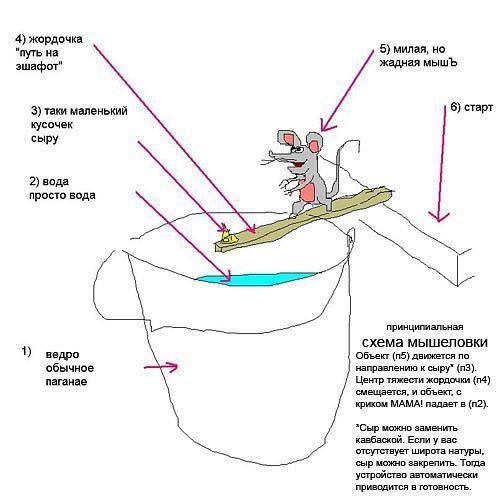 как можно ловить мышей в доме